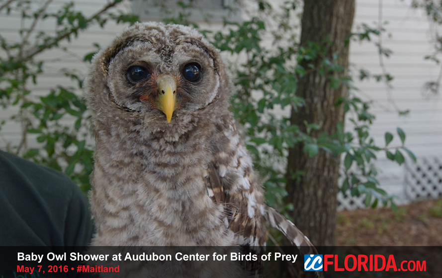 2017 Baby Owl Shower At The Audubon Center For Birds Of Prey In Maitland