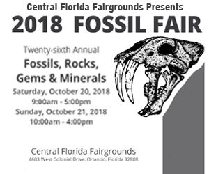 Th Annual Fossil Mineral Gem Show In Orlando Preview - Central florida fairgrounds car show