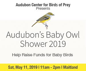 AudubonBabyOwlAd19