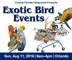 2019 Summer Exotic Bird Show in Orlando Preview – Otownfun